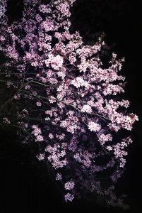 Lola Hakimian – Au plaisir la douleur